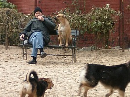 Dogs and man on bench at dog park